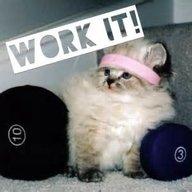 FitnessKitty