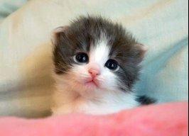 Catty0062